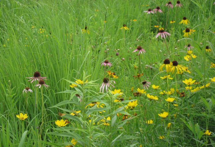 Prairie planting (2)