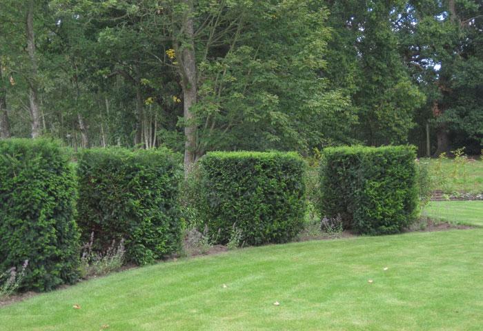 top Sussex garden designer (4)